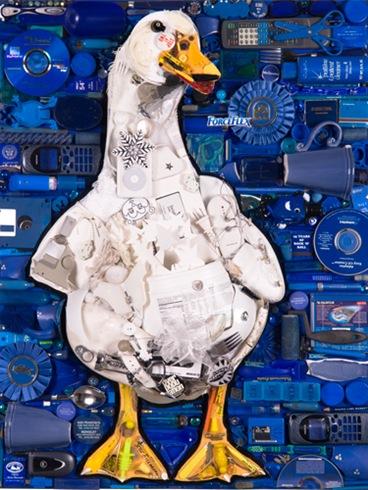 duckpicture